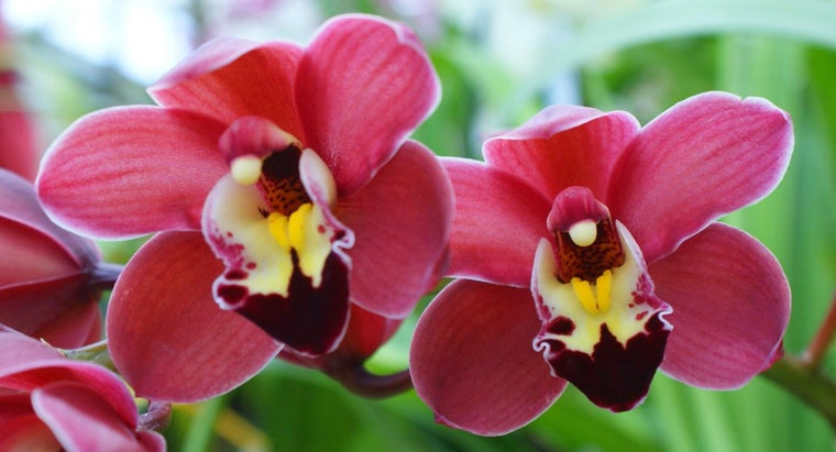 How Do You Repot an Orchid?
