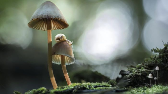 What information can be found on a mushroom guide?