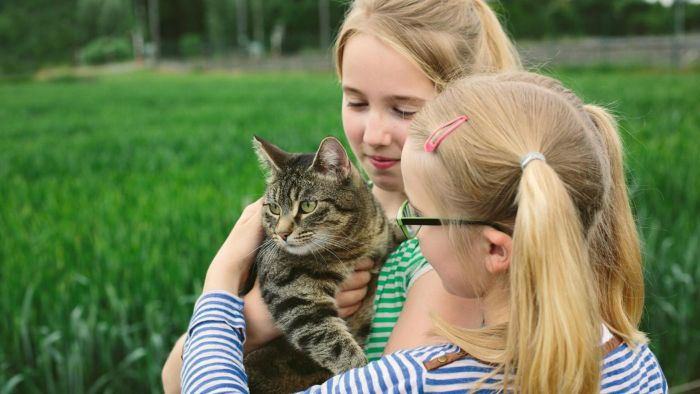 How Can You Prevent Ticks From Biting Cats?