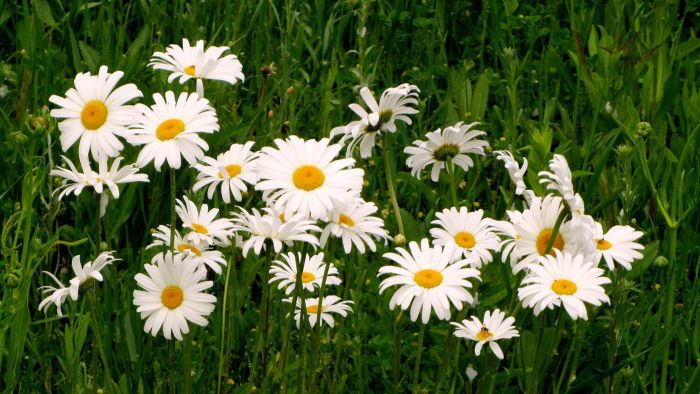 Where Can You Find Photographs of Daisies?