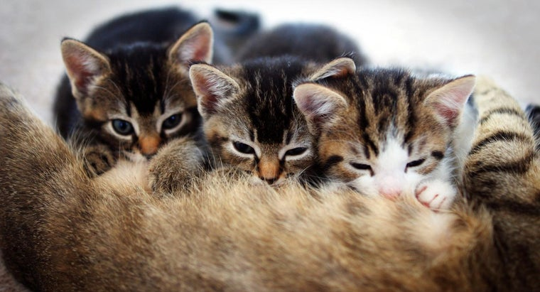 What Does a Tabby Kitten Look Like?