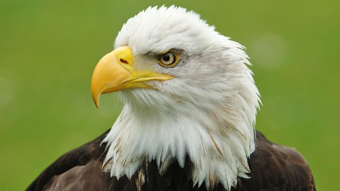 Where Can You Find Bald Eagle Information?