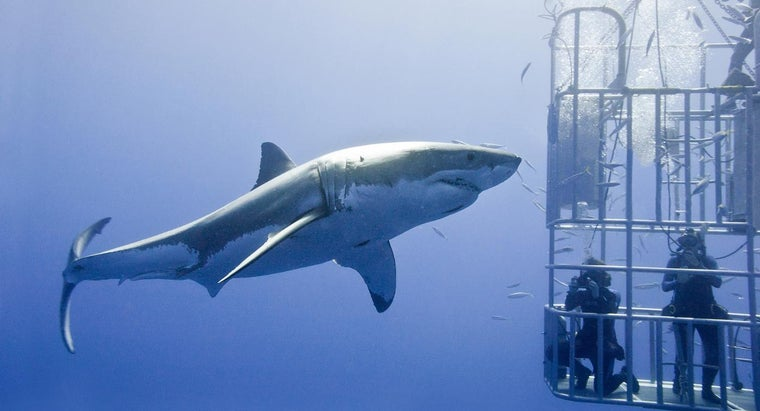 What Are Some Amazing Facts About Sharks?