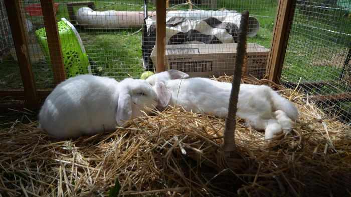 What Are Some Rabbit Hutch Designs?