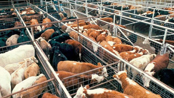 How do online livestock auctions work?