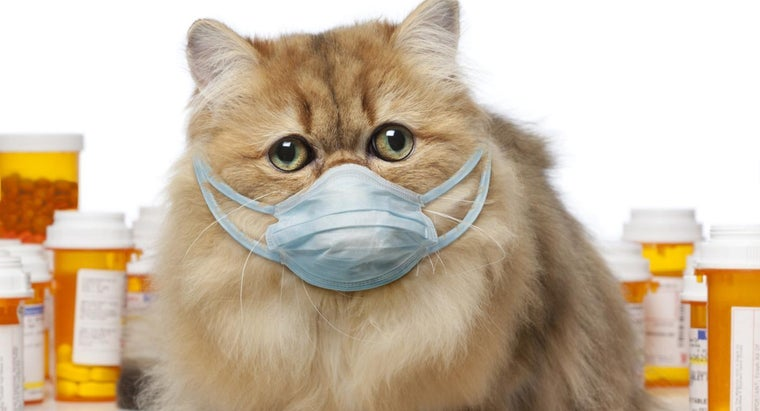 What Should You Do If Your Pet Ingests Poison?