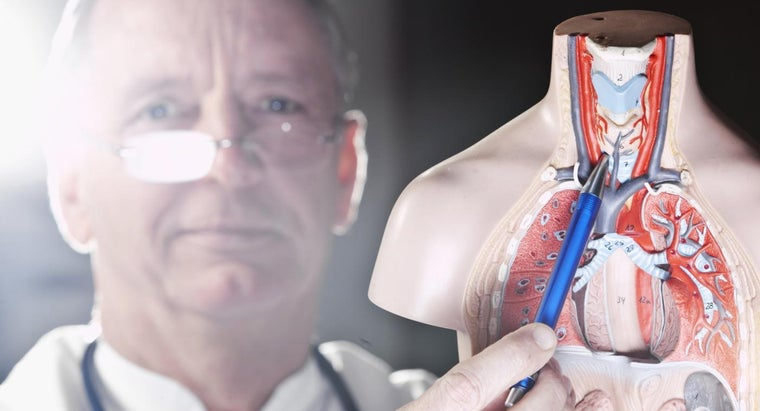 What Are Signs of a Malfunctioning Thyroid in Men?