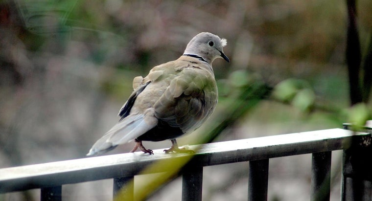 What Are Some Ways to Combat a Pigeon Problem on a Balcony?