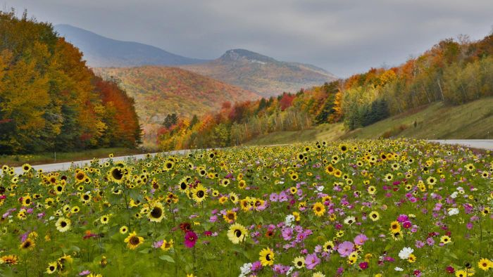 What Are Some Flowers That Bloom in the Autumn?