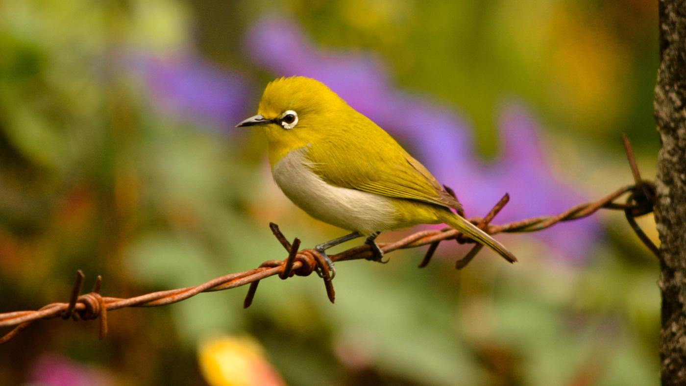 What Are Some Fun Bird Facts for Kids?
