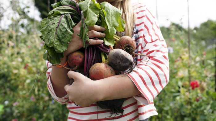 How Do You Cook Raw Beets From the Garden?