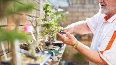 How Do You Care for Your Bonsai Tree?