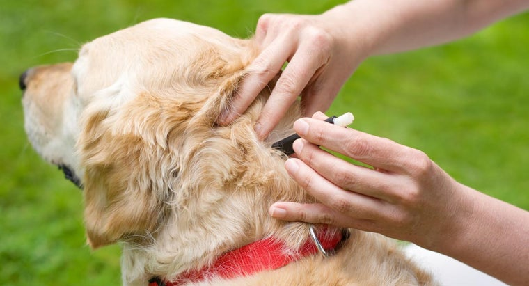 What Are Some Effective Treatments for Dogs Infested With Ticks?