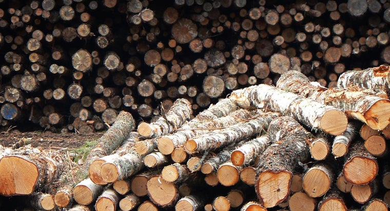 What Is the Process of Tree Logging?