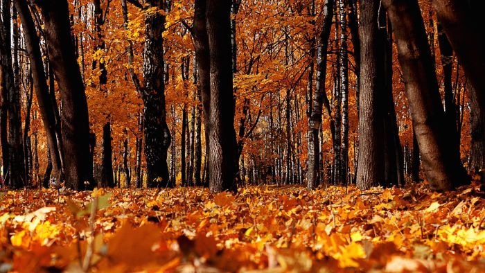 What Are Some Good Autumn Poems?