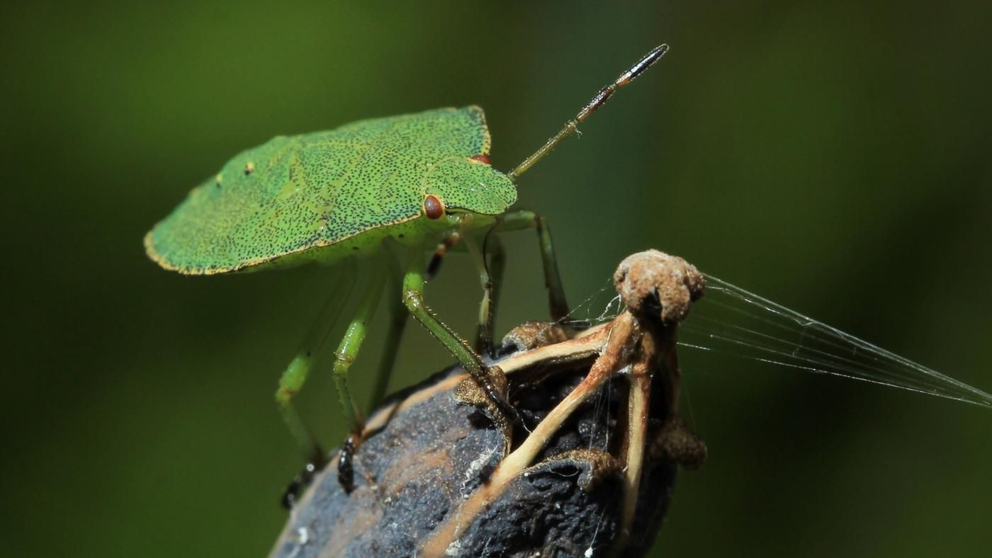 how to keep stink bugs from coming in your house