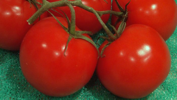 Can Tomatoes Cause Gout?
