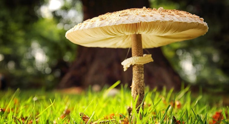 What Is an Easy Way to Identify a Certain Mushroom?
