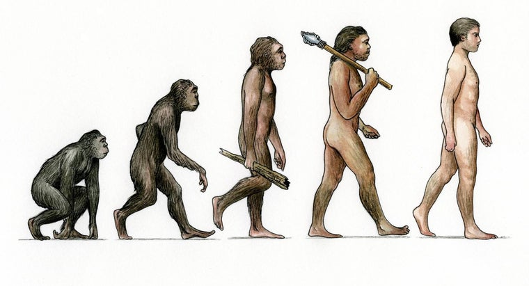 What Are Some Answers to Science Questions About Evolution?