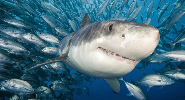 What Are Some Online Games About Sharks?