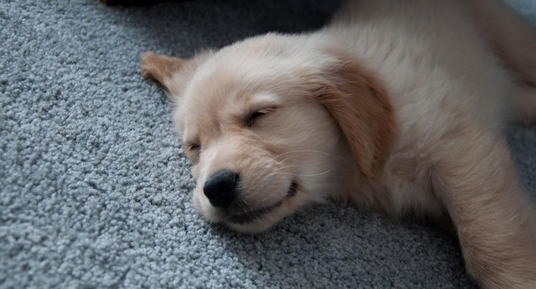 What Are the Benefits of Using an Online Puppy Finder?
