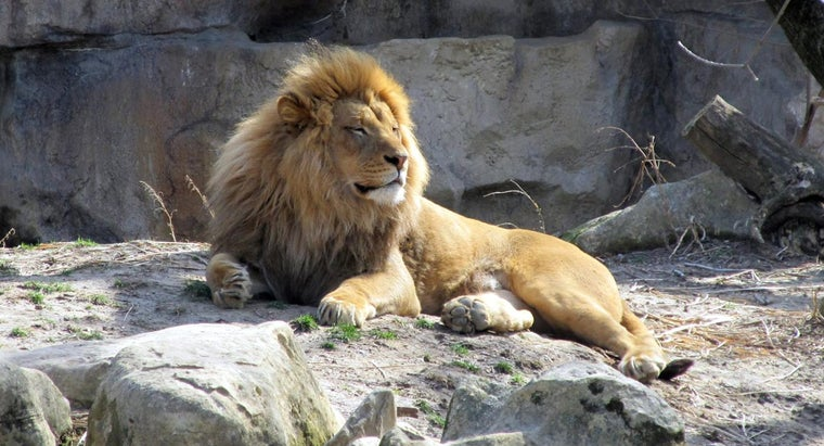 What Are Some Facts About Lions for Kids?