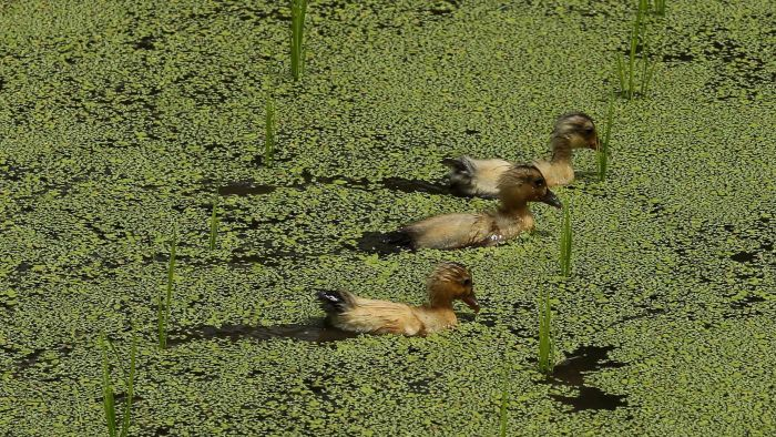 What are some common migratory birds?