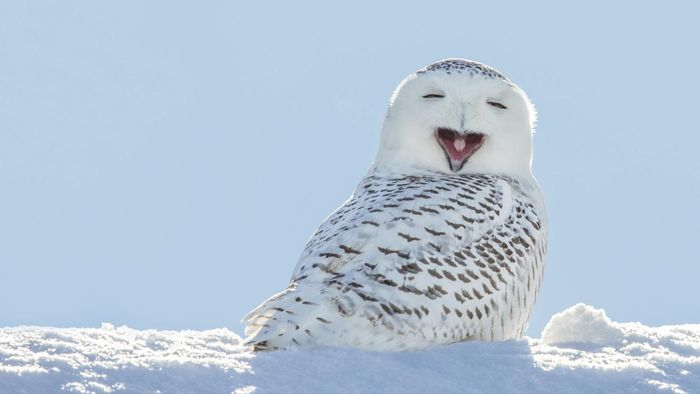 What Are Some Cool Facts About Owls?