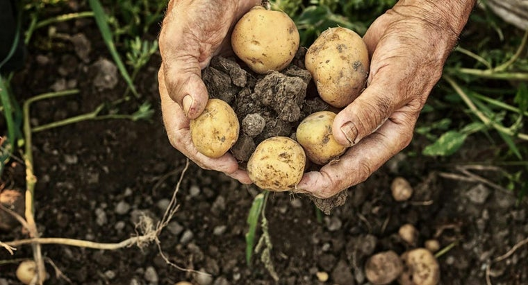 What Is a Good Way to Plant Potatoes?