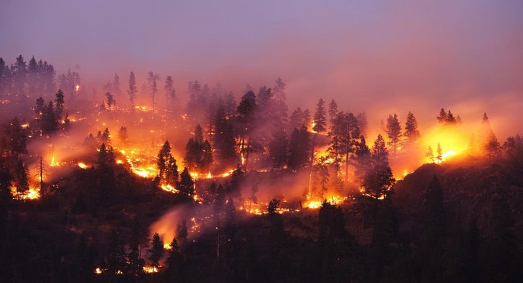 What Are Some Facts About Wildfires?