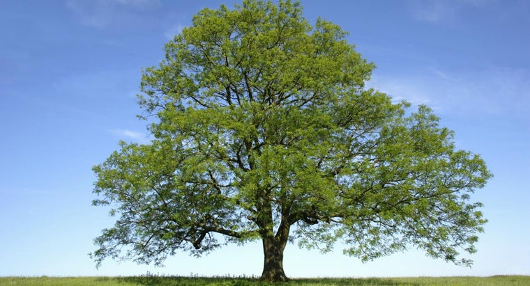 What Are Some Ash Tree Diseases?