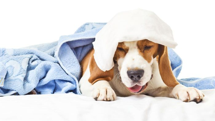 What Are Some Home Remedies for Dog Cough?