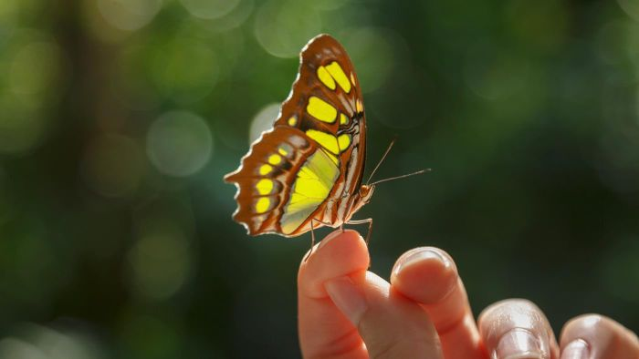 What Are Some Facts About Butterflies?