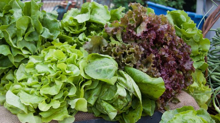 What Are the Different Types of Lettuce?