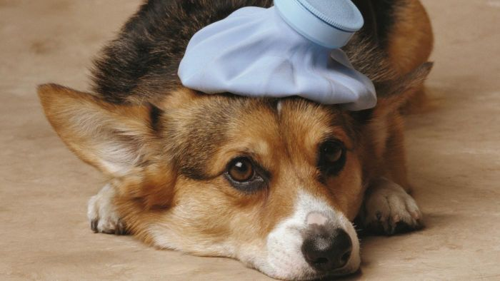 What Are the Options for Someone Who Cannot Afford the Cost of Pet Surgery?