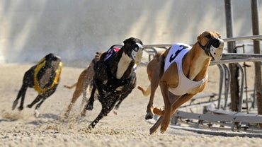 Where Do the Greyhound Races Take Place?