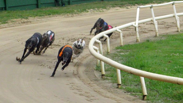 How Do You Find Florida Greyhound Racing Results?