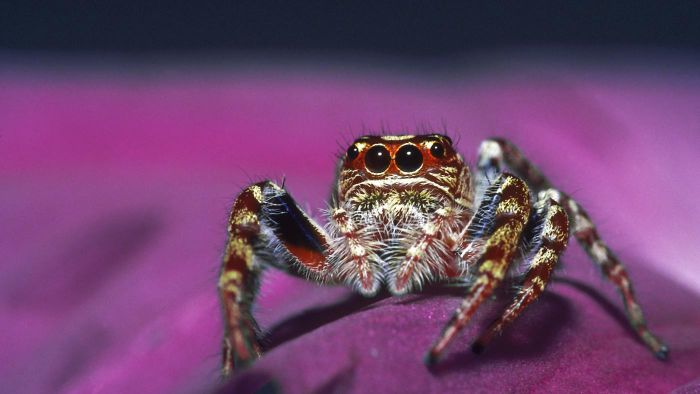 What are some interesting facts about jumping spiders?