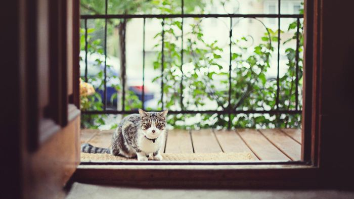 Do indoor cats age quicker than outdoor cats?