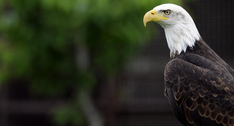 Where Can You Find American Eagles?