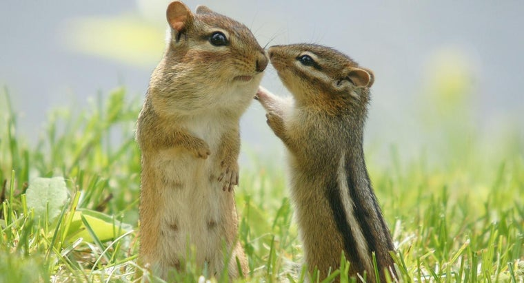 What Are Some Fun Chipmunk Facts for Kids?