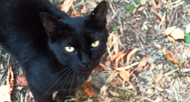 What Are Some Popular Names for Black Cats?