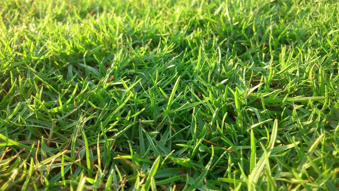 What Are Some Quality Lawn Fertilizers?