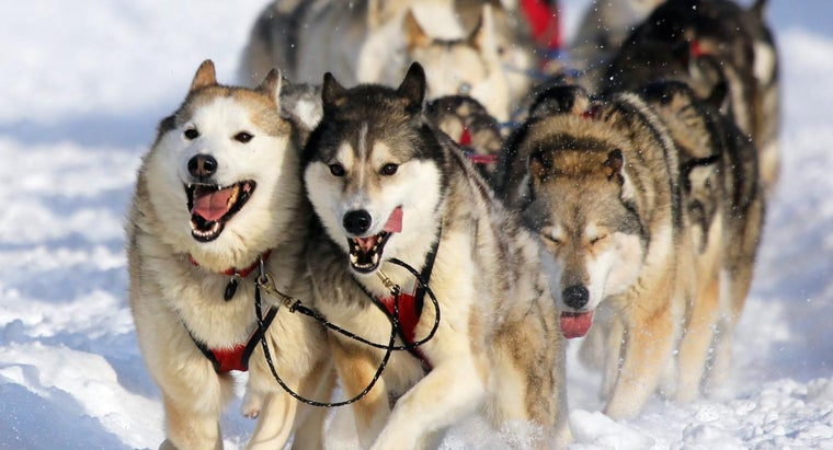 What Is the Route for the Iditarod Race?