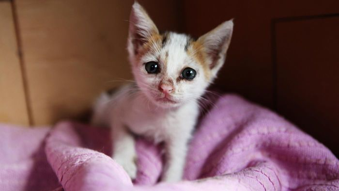 How Do You Adopt Kittens Using Petfinder?