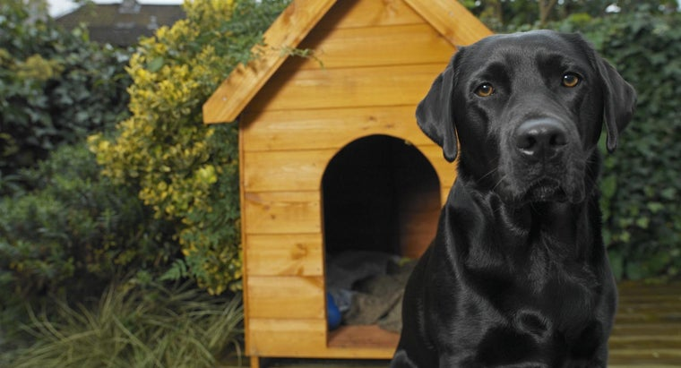 How Do You Build Your Own Doghouse?