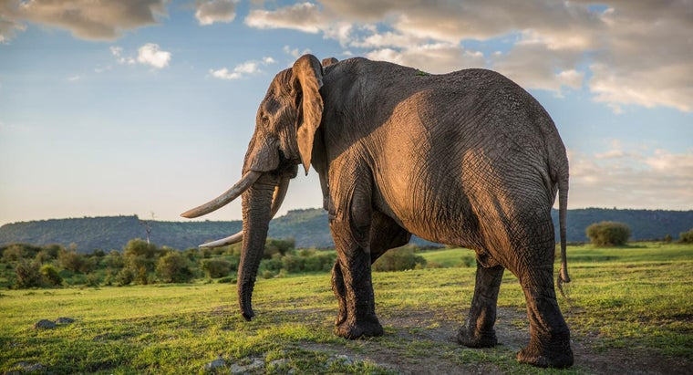 What Are Some Simple Facts About Elephants for Children?
