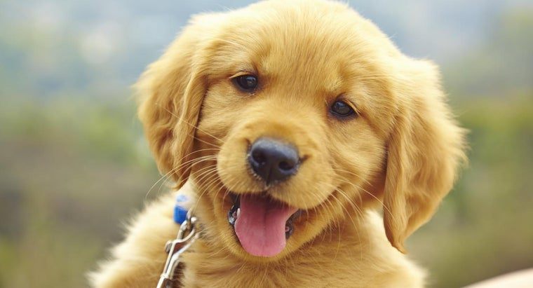 What Should You Consider When Adopting a Puppy?