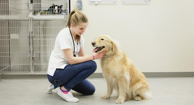 How Much Does a Typical Visit to the Vet Cost?