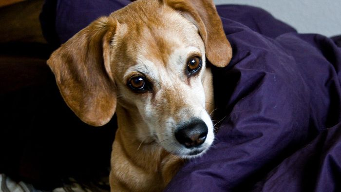 What Is a Safe Dosage of Aspirin for a Dog?